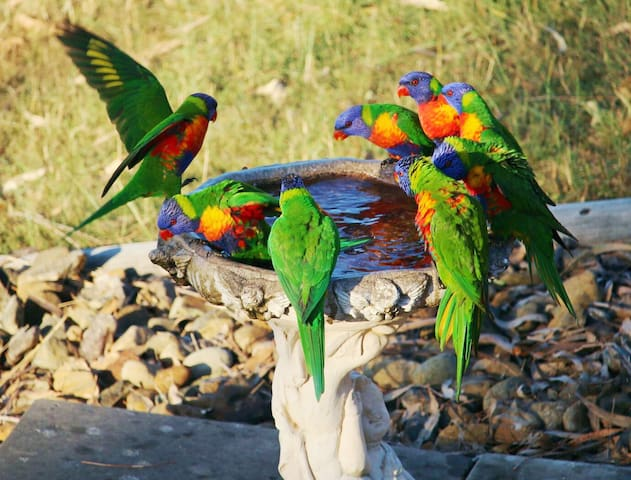 Seen from the deck: standing room only at the birdbath