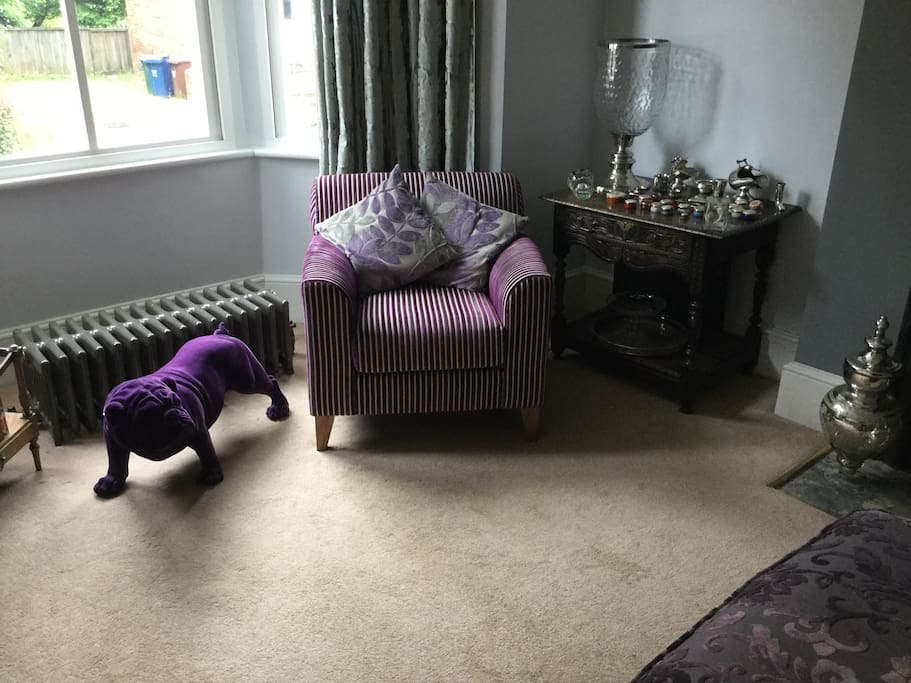 Sid the dog loitering in the sitting room