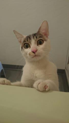 寂しくない‼ 大須の夜をネコちゃんと楽しい会話で 楽しもう。 - Naka Ward, Nagoya - House