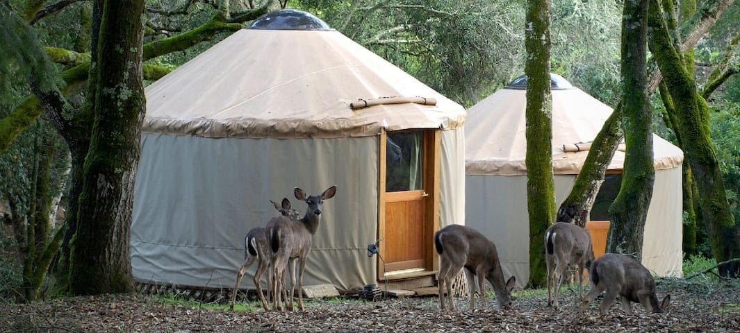 Yurt glamping adventure for Naturists