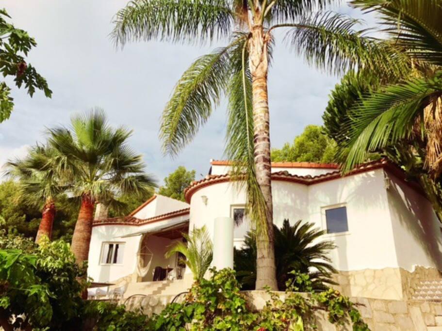La villa implantée sur 1000 m2 entourée de sa végétation luxuriante