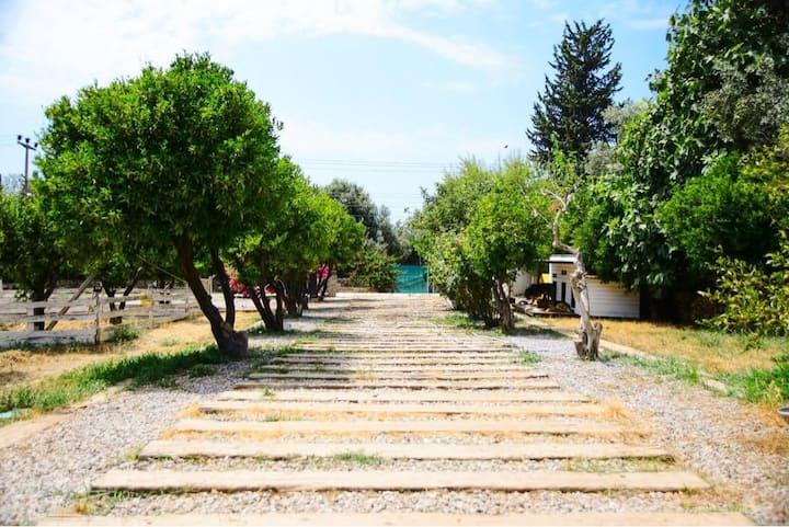 Bodrum`da mandalina bahçesinde bir CENNET