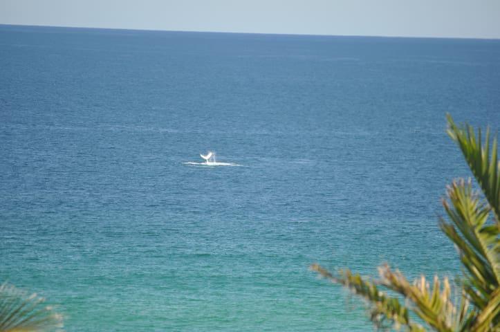 White Sands - Beach Holidays Noosa