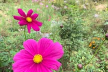 I plant flowers and wildflowers everywhere. We like to keep it wild for the pollinators.