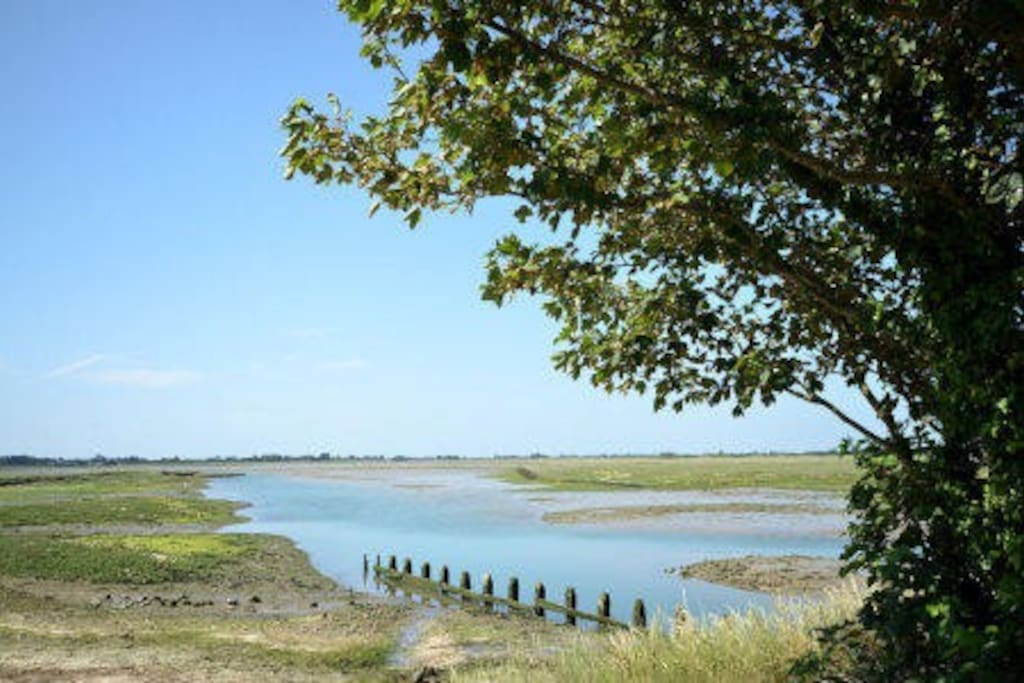The RSPB nature reserve