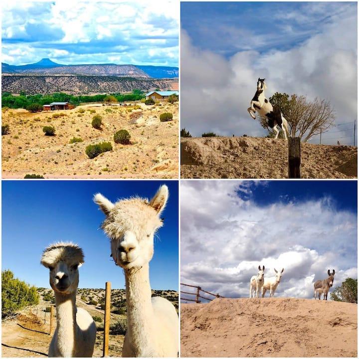 #1-Hot Tub-B & B Style-Horses+Alpacas+Mini Donkeys
