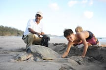 Helping to move turtle eggs to a safer location up the beach.