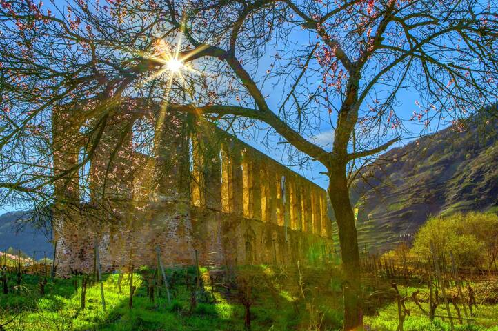 Old Kloster Ruine