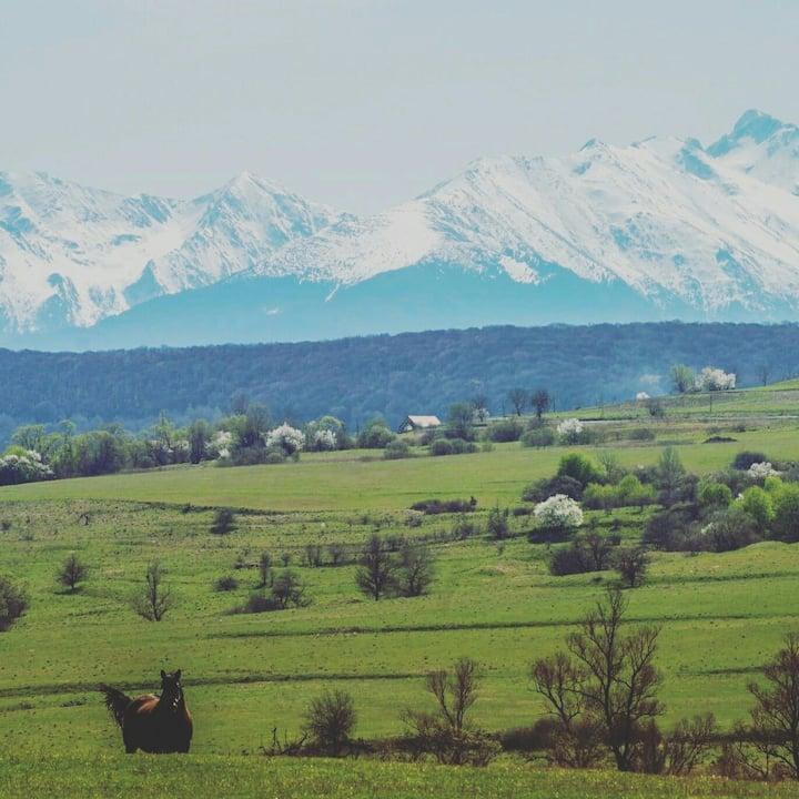 Transylvanian Cottage near Sibiu (free bikes)