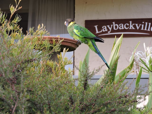 Laybackville - A Garden And Bird Lovers Sanctuary
