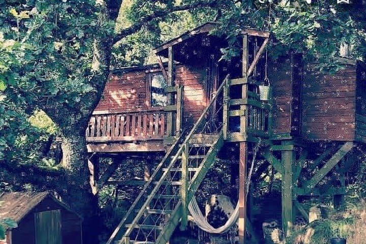 TREE HOUSE at GIN & RUM DISTILLERY in CORNWALL