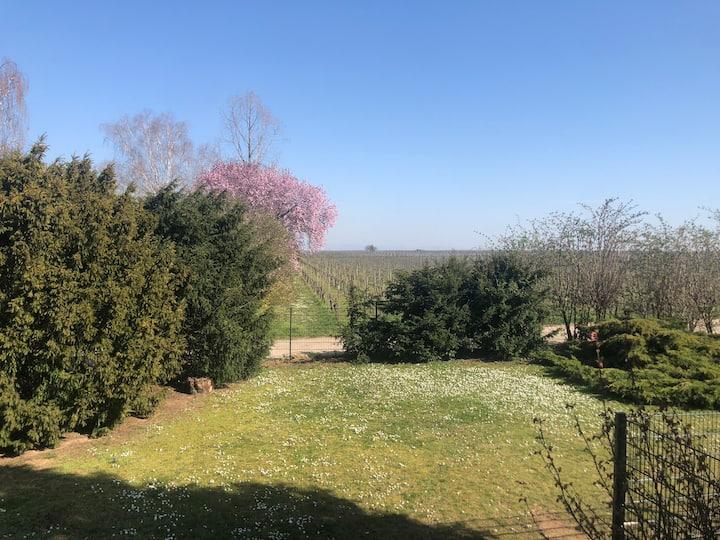 Wohnen am Feldrand/Weinberg mit eigenem Garten