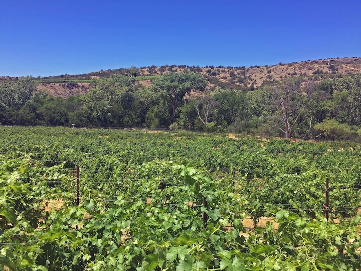 Vineyards at Page Springs Cellars
