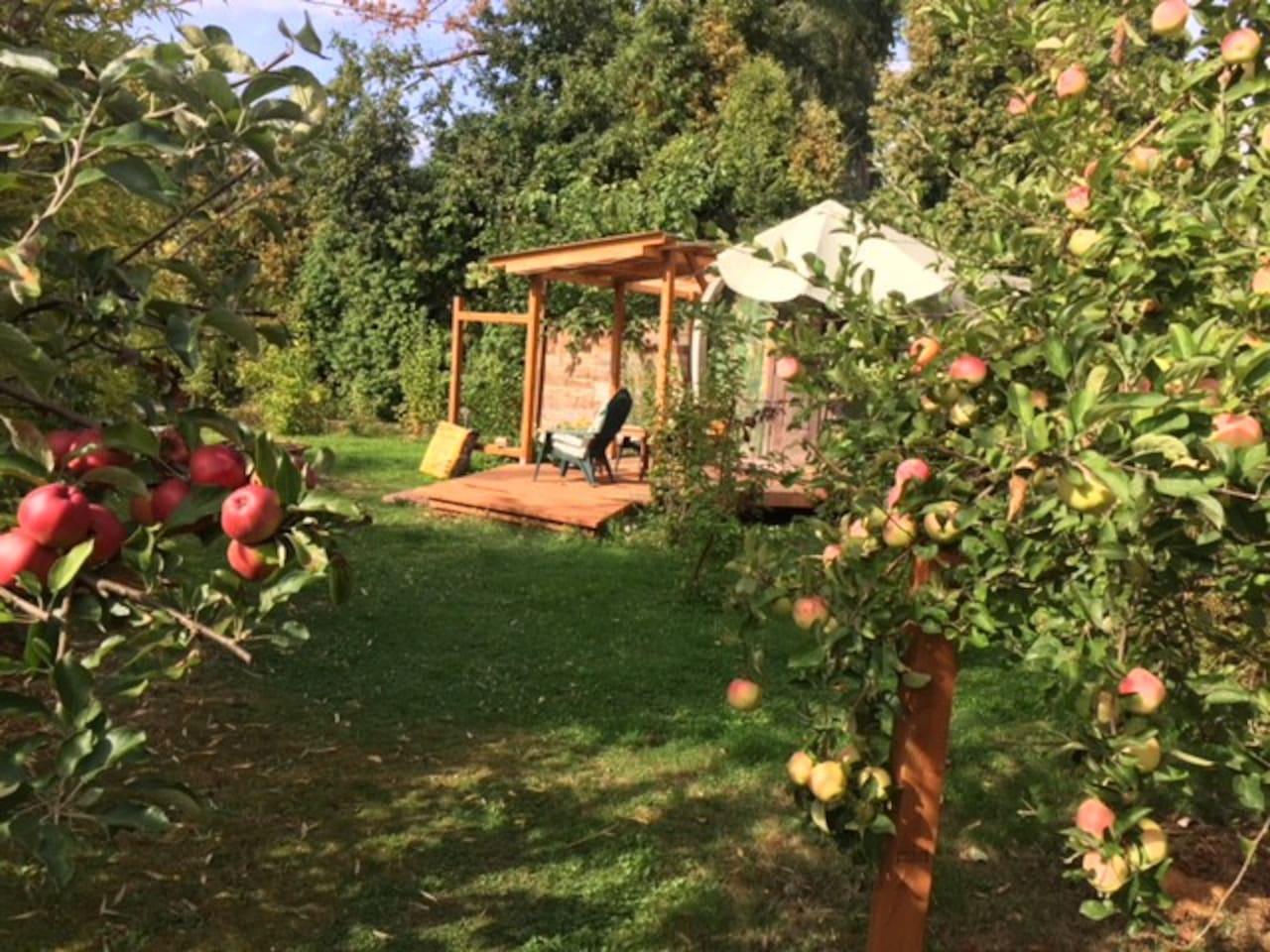 Gypsy Caravan in the apple trees