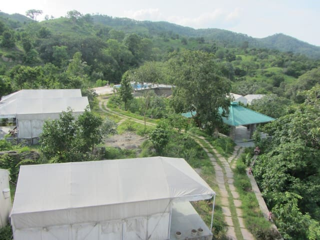 The jungle camp JUST AMAZING  forest n nature