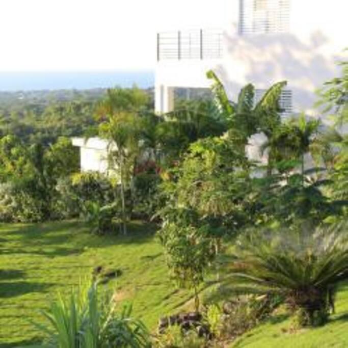 Le jardin tropical entoure la maison et la protège des regards