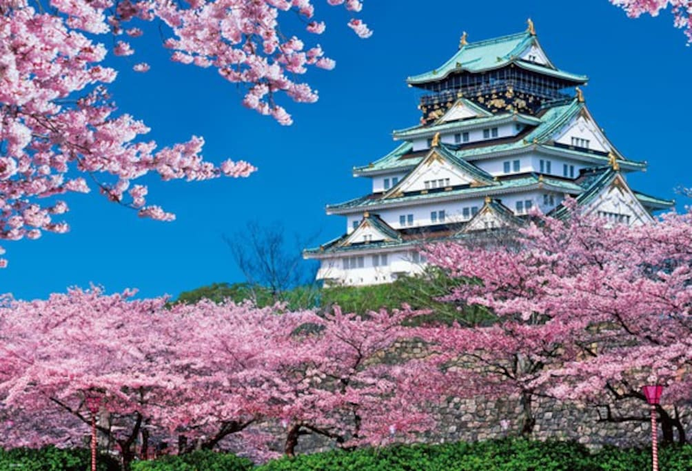 There are many sights of cherry blossoms in Osaka Castle.
