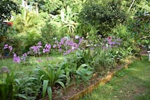 Orchid  fence!, not every villa can offored this.