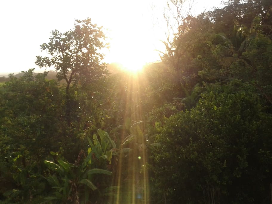 Premiers rayons du soleil par un matin d avril....