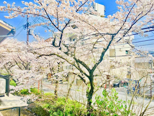 RiverView Japanese Flat Central Kyoto Gion 京都高瀬川 桜