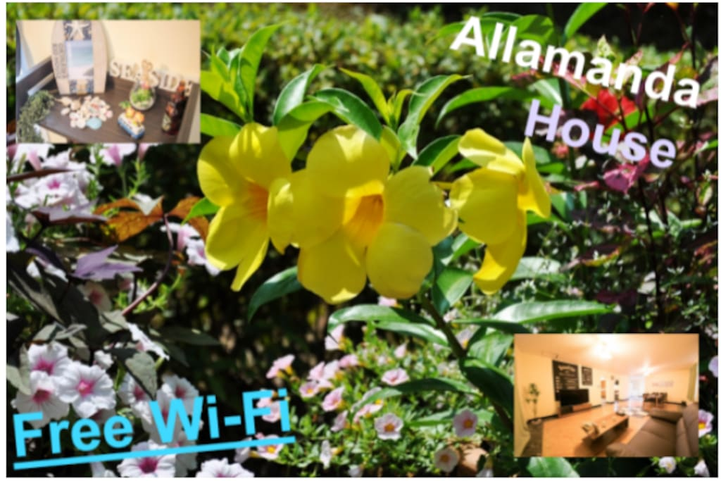 アラマンダハウス Allamanda House