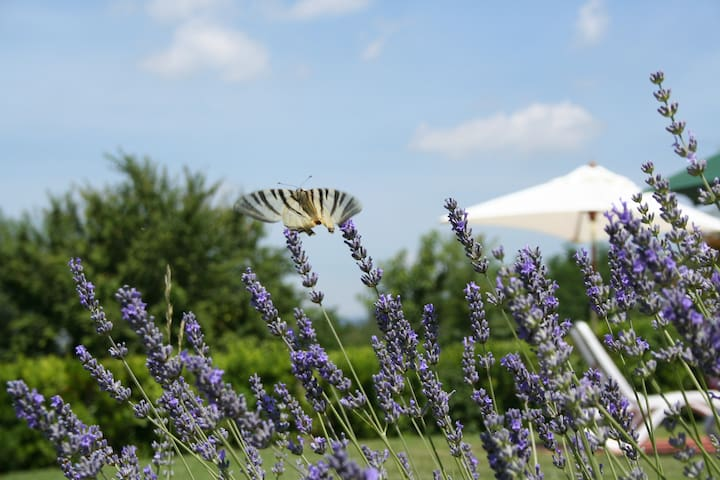 Shabby Chic PODERE PIANA in TUSCANY, Florence