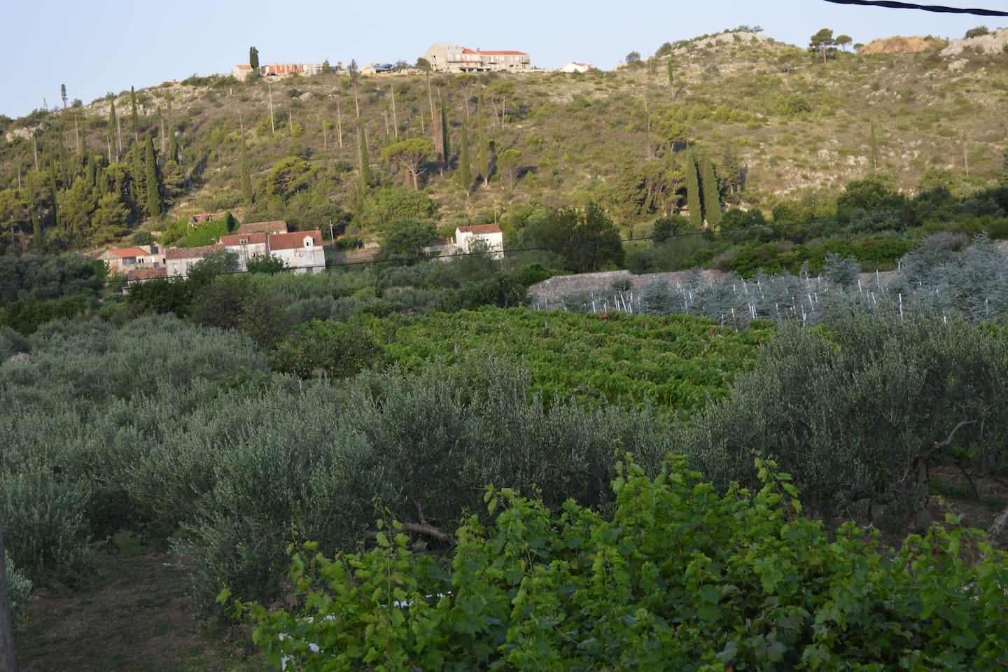 Olive grove, vine yard and eucalyptus across the road, we are in the heart of the valley but only 8 mins drive to a sandy beach without stairs and 15 minutes drive to Old Town Dubrovnik.