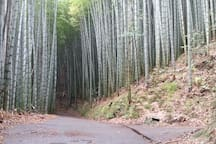 Tamatori Walk -  2 hours round walk on concrete  road starting form our house. on the way you have view points, see many Green Tea plantations, and walk through  a Bamboo forest.