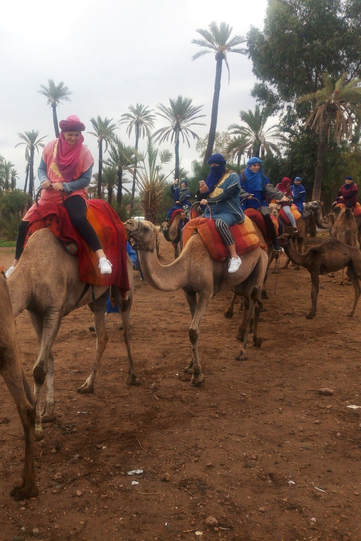Camel Riding Experience
