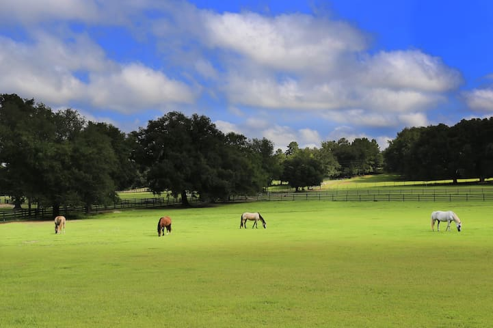 Beautiful Horse Farm