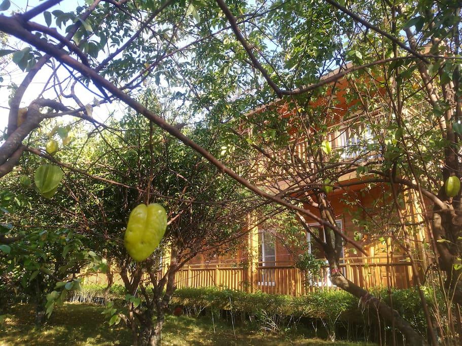 杨桃园中的木屋度假别墅