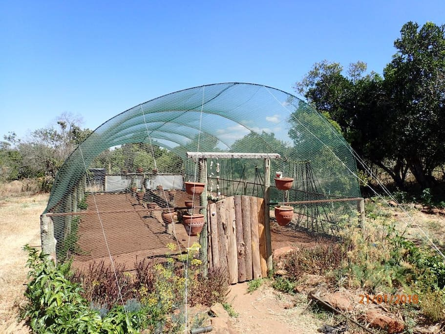 Inspirational Green house. Currently being planted with vedgetables, recycled shower water irrigation system to grow your own food. Pick your own for dinner. 20 Mtrs from the Wagons