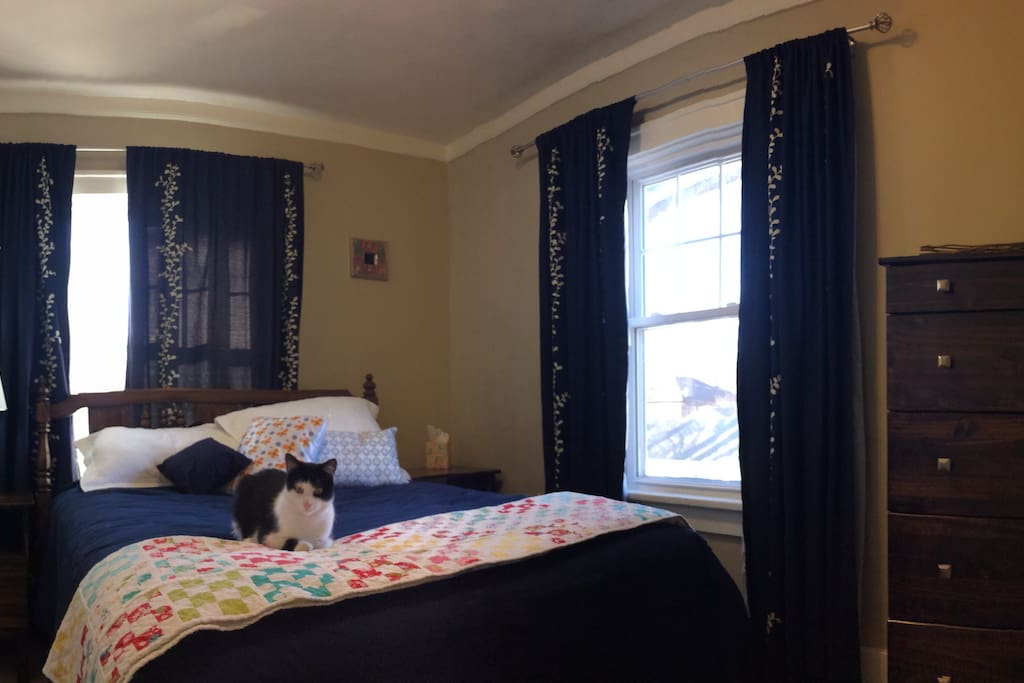 Guest Bedroom:  Bingo will not be here for your stay.  He just wanted to pose for the photo.  ;)