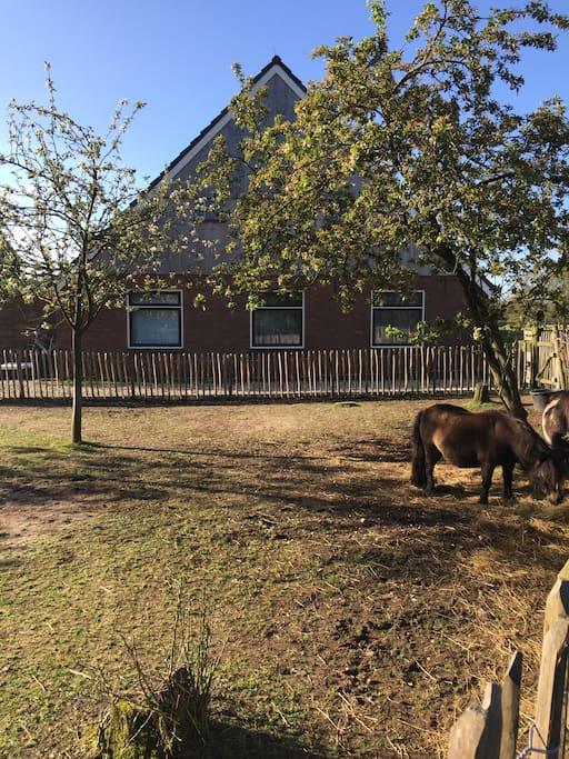 Uitzicht op de pony's