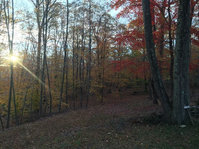 Hiking trails through the Scout camp and the state park which surround the 40 acre property so it feels like 100 acres.
