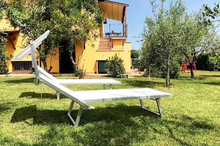 "large studio apt among  olive trees ""Poggiaranci"""