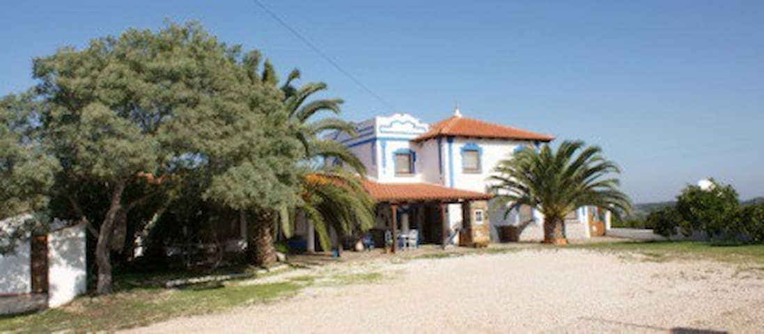 Horta velha - Monte Alegre - Casinha Feliz