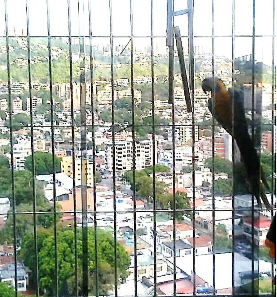 Vista desde nuestro espacio. A buena altura desde Los Símbolos apreciar claramente la Urbanización de Santa Mónica y Cumbres de Santa Mónica. Caracas. Es una zona de Guacamayas. Se ven con frecuencia a final de la tarde.