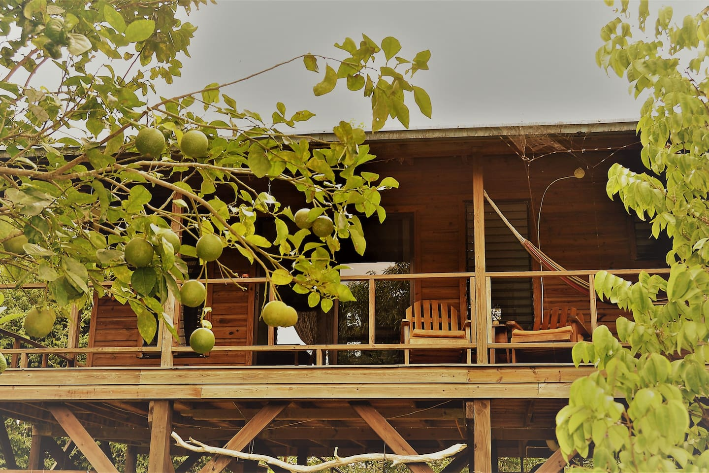 This Relaxing Tree Top Location, offers superior accommodation at a very affordable price, with a wonderful private balcony, and being in a elevated  location keeps you out of the 'fly zone' of most insects - including the mosquito's