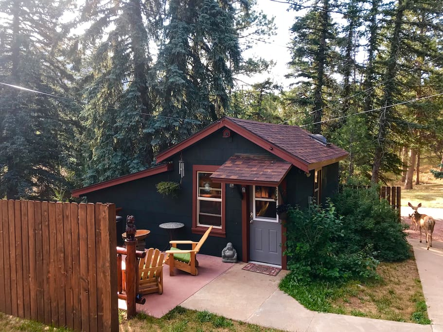 There has been an added 6 foot privacy fence around the cabin's private patio! Can you spot the frequent guests?