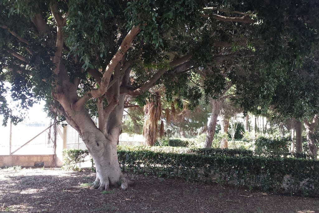 Viale di ingresso e giardino