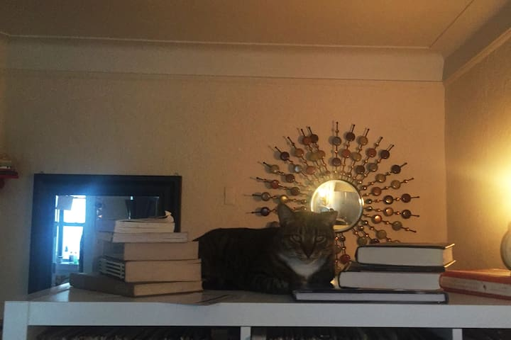 Cozy apartment with an amazing cat in Brooklyn!!! - Brooklyn - Appartement