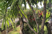 Grande villa avec jardin de 10000m2