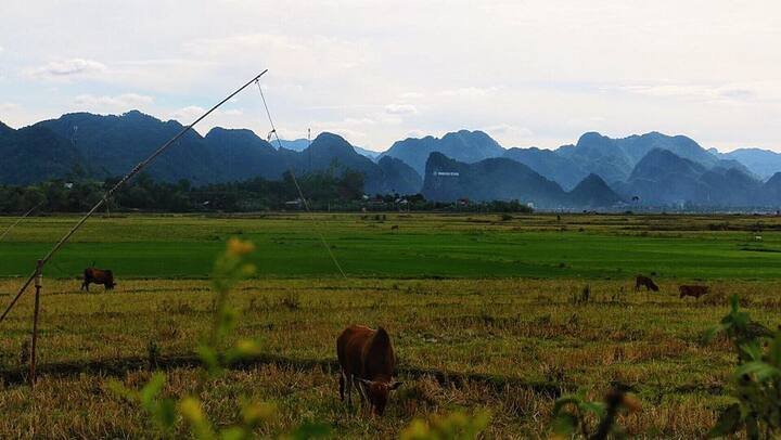 phong nha palafita bungalow view field & mountain