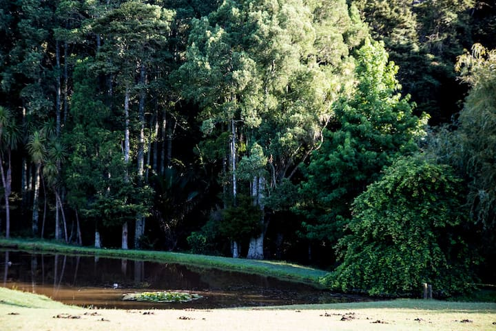 Gorgeous bush, Kauri NZ native trees beside lake with lilies, a nature and flower/plant lovers paradise