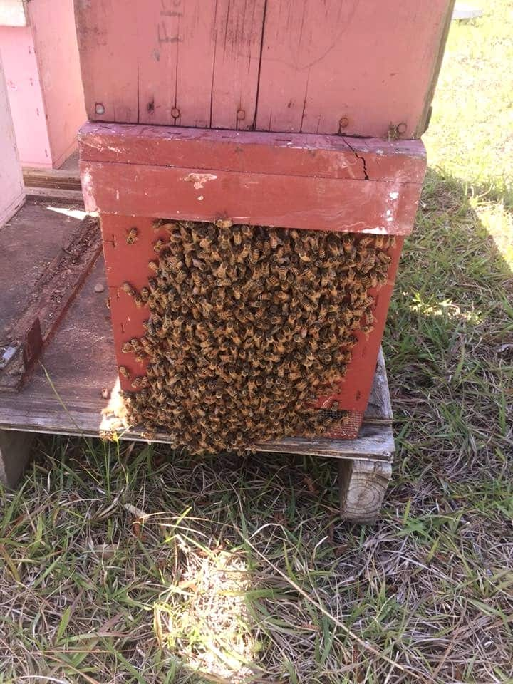 A small hive ready for more room