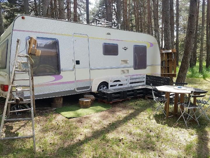 Caravane au milieu des bois, au bord de la rivière