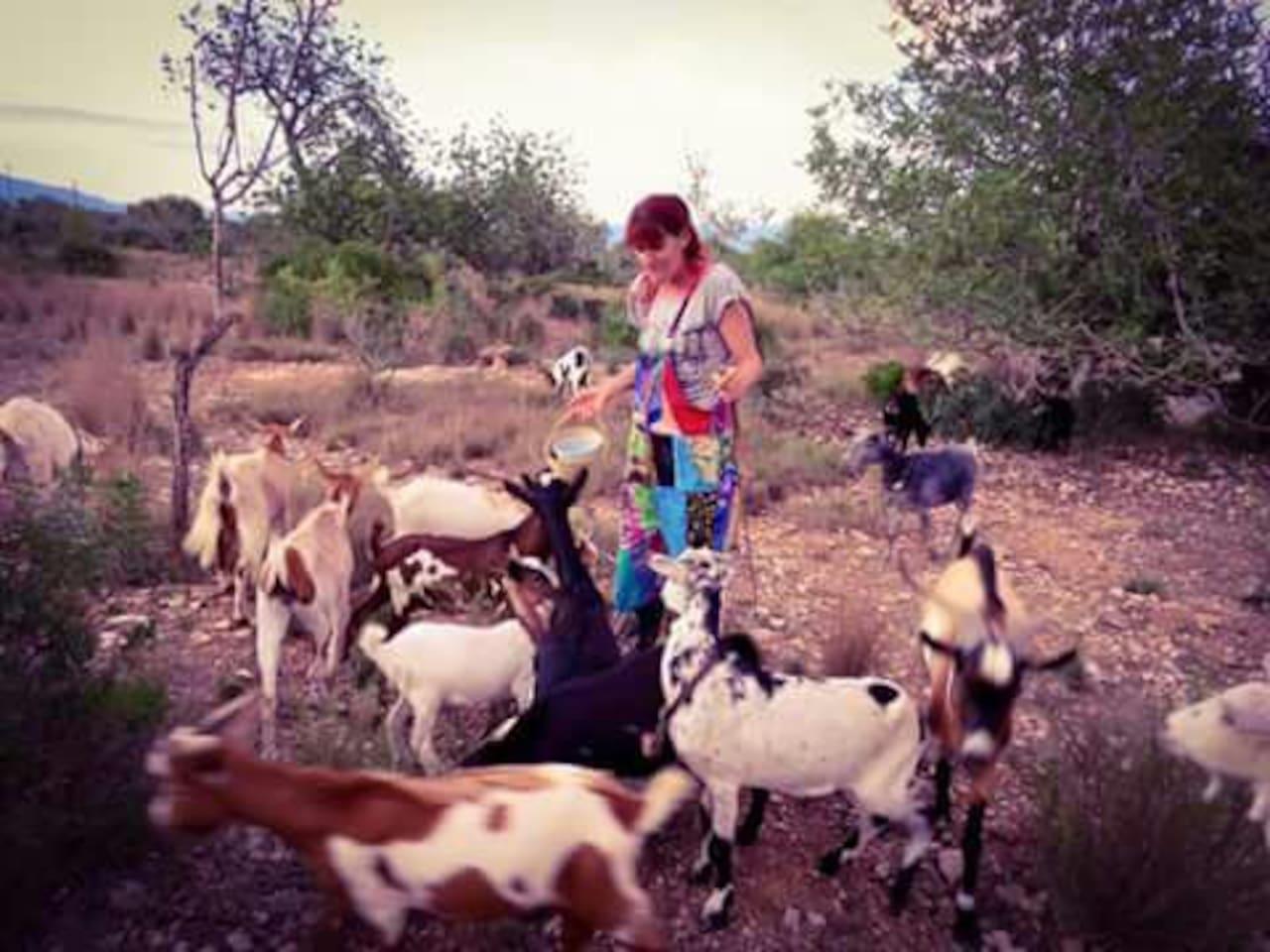 A few of my herd