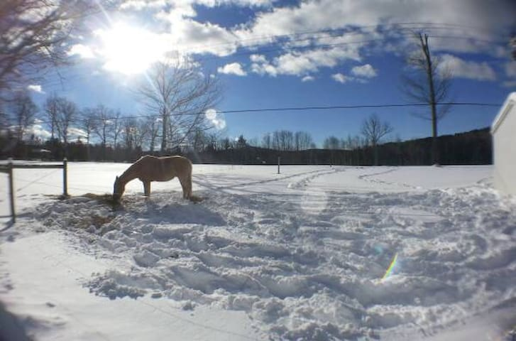 Amazing mountain views & animals! - Ossipee - บ้าน