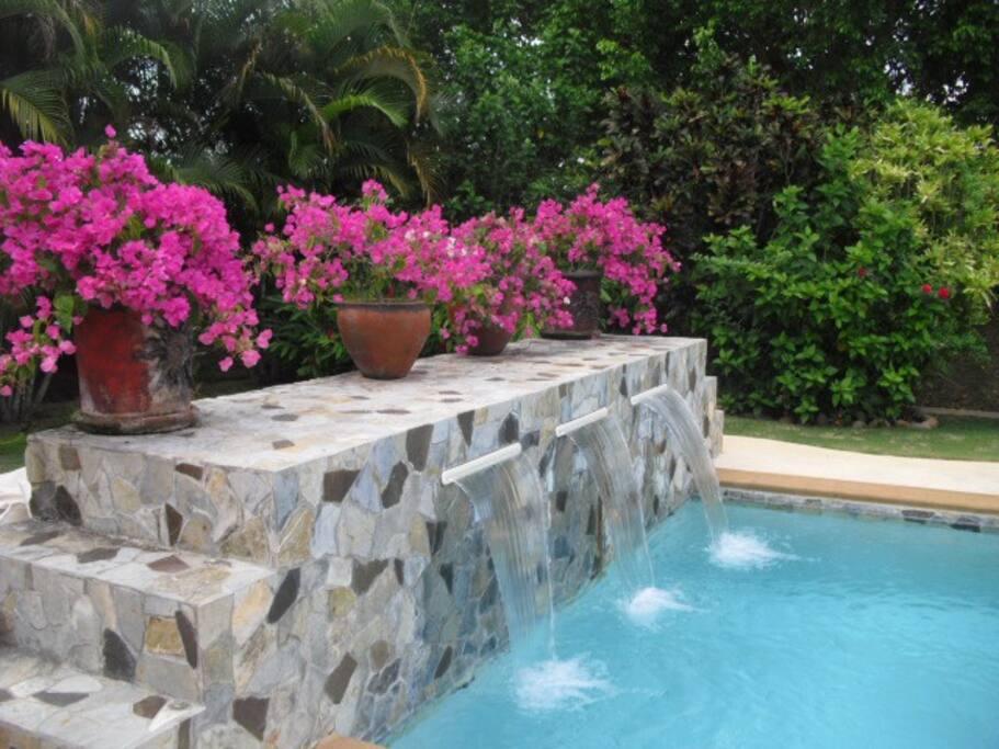 Private backyard swimming pool!